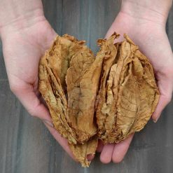 Basma Oriental Tobacco in a young woman's hands