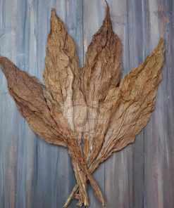 Bay Fronto Leaves in fan pattern