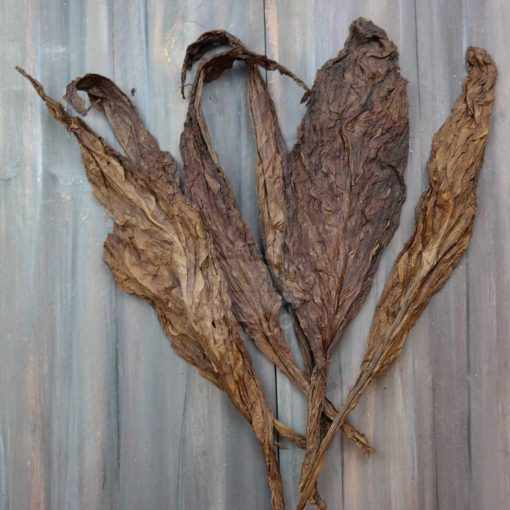 Black Fronto Tobacco Leaves