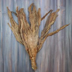 Broadleaf Fronto Tobacco Leaves