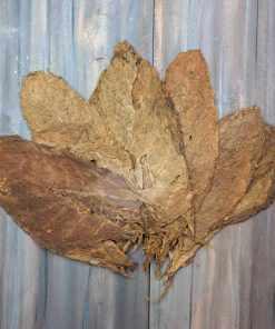 Cibao Valley Dominican Tobacco, Seco Priming