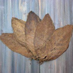 Criollo 98 Tobacco, Whole Leaf