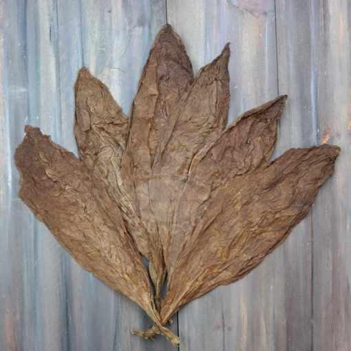 Criollo 98 Variety Tobacco, Wrapper Grade