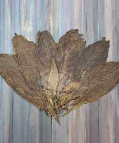 Dominican Variety Tobacco, Ligero Cutting