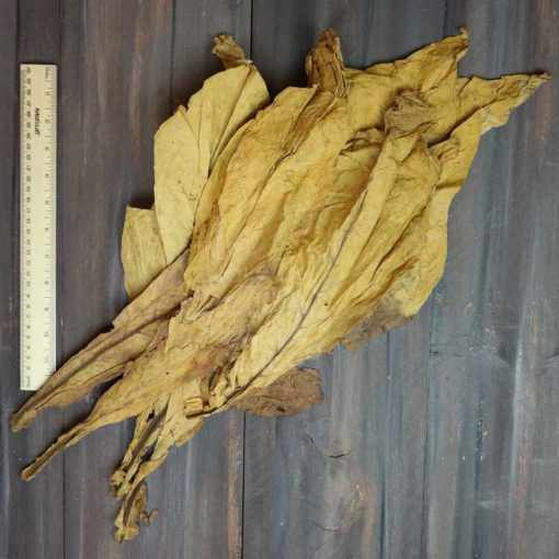 Virginia Thin Leaf Cutters, First Priming