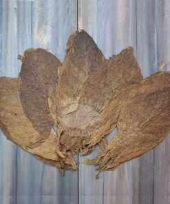 Cibao Valley Corojo Tobacco, Viso Priming